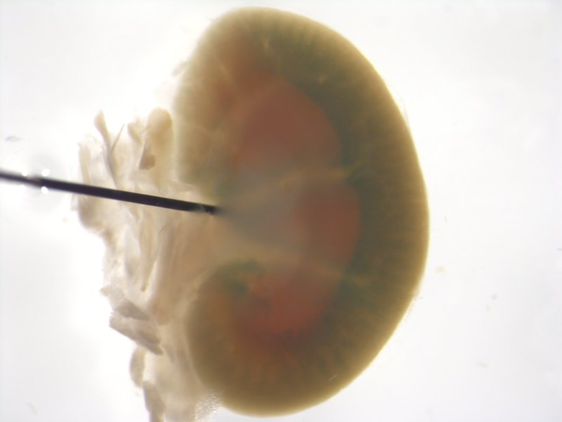 Kidney (Female / Wildtype)